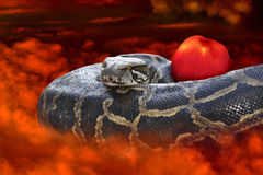 Lost Innocence. The snake and the apple. Temptation of Eve stock photos