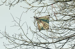 Lost kite in a tree Royalty Free Stock Photography