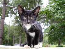 Lost Kitten. Cute kitten staring with wide eyes royalty free stock photography