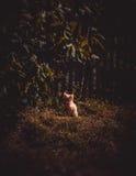 Lost kitten Stock Image