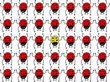 Lost ladybug Stock Photo