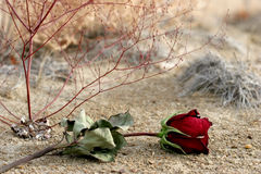 Lost love. Lost dry rose laying on the ground, symbolising lost love or breaking up. closeup with focus on bud Royalty Free Stock Photos