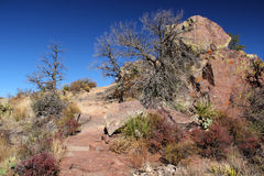 Lost Mine Trail. In Big Bend National Park, Texas Royalty Free Stock Photos