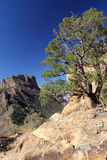 Lost Mine Trail. In Big Bend National Park, Texas Stock Photography