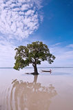Lost in nature. A journey by boat in a tranquil lake Royalty Free Stock Image