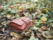 Lost orange wallet. Lost orange female wallet on the ground of early autumn deciduous forest Stock Image