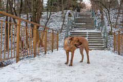 Lost pitiful dog. Miserable lost dog alone in park in winter stock image