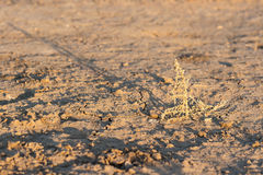 Lost plant on the drought land earth dried without rain Royalty Free Stock Image