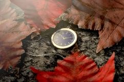 Lost Pocket Watch On Chain. A concept image showing a an intricate gold antique pocket watch attached to a chain apparently lost on the ground surrounded by dead Royalty Free Stock Images