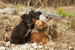 Lost puppy stand together Stock Photography