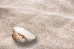 LOST SEA SHELL ON THE SAND royalty free stock photo
