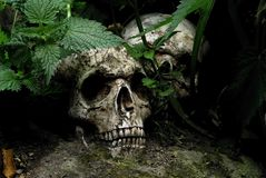 Lost Skulls Royalty Free Stock Images
