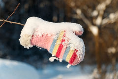 Lost in the snow winter gloves. Passers hung it on a tree branch to find her owner Royalty Free Stock Image