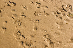 Lost steps in the wet sand of a beach Stock Image