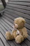 Lost Teddy Royalty Free Stock Image
