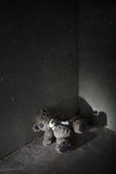 Lost teddy bear Stock Photos