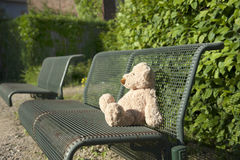 Lost teddy bear on a bench Stock Photo