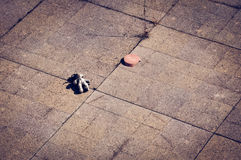 Lost teddy bear. A teddy bear lays lost and lonely left by a kid Stock Image