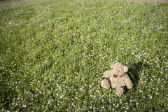 Lost Teddy bear outdoors Stock Photos