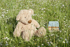 Lost Teddy bear outdoors Stock Photography