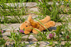 Lost toy bear lying on a wooden platform Royalty Free Stock Image