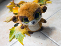 Lost toy in colorful autumn leaves Royalty Free Stock Image