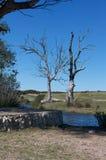 Lost Tree Stock Photos