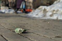 Lost zerknitterte Dollar auf der Straße Lizenzfreie Stockbilder