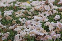 Lostusblad, waterlily blad Stock Afbeeldingen