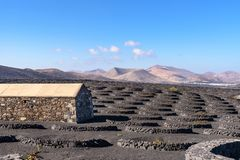 Losu Angeles Geria winnica na powulkanicznej ziemi, Lanzarote, wyspy kanaryjska, S zdjęcie stock