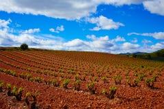 Losu Angeles Rioja winnicy pola w sposobie święty James zdjęcie stock