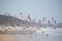 lotów seagulls Obrazy Stock