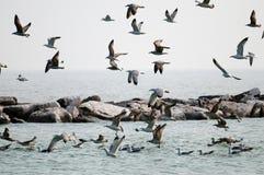 lotów seagulls Zdjęcie Stock