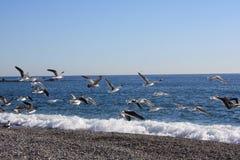 lotów seagulls Zdjęcia Royalty Free