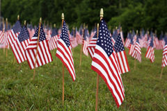 A lot of american flags Stock Image