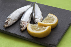 Lot of anchovies Royalty Free Stock Image