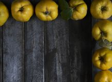 A lot of apple quince  on dark wooden background. top view. A lot of apple quince  on dark wooden background Stock Image