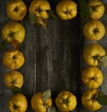 A lot of apple quince  on dark wooden background. top view. A lot of apple quince  on dark wooden background Royalty Free Stock Photos