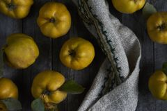 A lot of apple quince  on dark wooden background. top view. A lot of apple quince  on dark wooden background Stock Photography