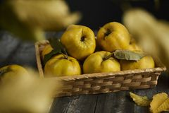 A lot of apple quince  on dark wooden background. top view. A lot of apple quince  on dark wooden background Stock Photo