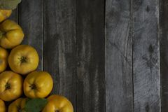 A lot of apple quince  on dark wooden background. top view. A lot of apple quince  on dark wooden background Royalty Free Stock Photo