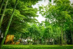 A lot of bamboo tree in the private graden with a little wooden cottage beside stock photos