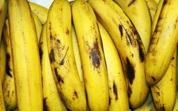 Lot of Bananas in Group at the Grocery. Banana is an edible fruit botanically a berry produced by several kinds of large royalty free stock image