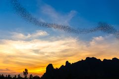 Bats Flying to Forage Royalty Free Stock Photography