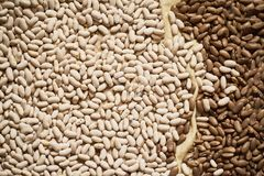 Common Beans over rustic background. Top view stock image