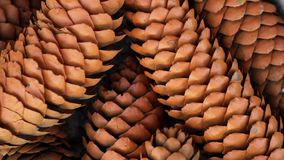 A lot of beautiful cone closeup in autumn spinning outdoors and smell October. Many fir cones closeup in bucket spinning background. Christmas cones with stock video