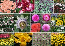 A lot of beautiful flowers royalty free stock photography