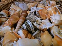 A lot of beautiful shells, Greek souvenirs. close up stock photography