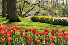 Lot of beautiful vivid tulips in the park Keukenhof Royalty Free Stock Images