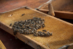 A lot of bees Royalty Free Stock Photo
